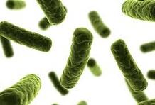 Antisipasi Bakteri Di Rumah
