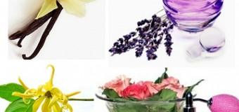 Bunga Bahan Dasar Parfum Alami