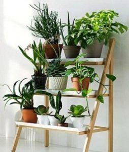 tanaman-dalam-ruangan