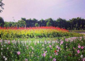 Taman Sakura di Surabaya