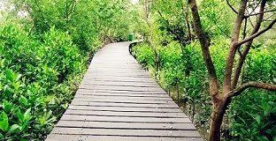 Sejuknya Hutan Mangrove Wonorejo Surabaya