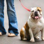 Perhatikan Hal Ini Saat Mengajak Anjing Berjalan-jalan