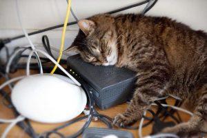 kucing dan kabel