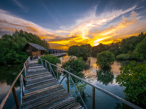 Menikmati matahari terbenam di Hutan Mangrove PIK