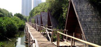 Menikmati Berbagai Hal di Dalam Hutan Mangrove PIK atau Pantai Indah Kapuk
