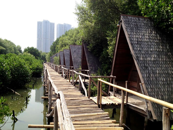 Menikmati Berbagai Hal di Hutan Mangrove PIK